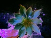 097-chalk-lily2-1