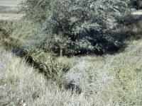 Fort HaysDefense Pit on old fort grounds (97).jpg