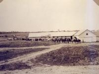 Horses & Mules August 1915 (90).jpg