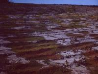 Landscape (247).jpg