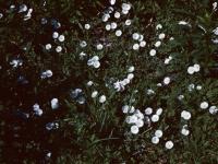 Bind Weed June 1950 (66).jpg