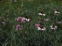 Hillside Flowers July 1947 (24).jpg