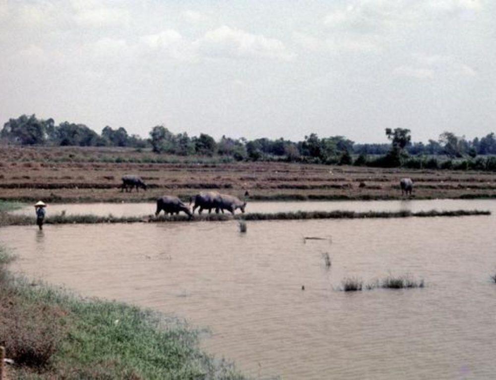 Vietnamese Irrigation